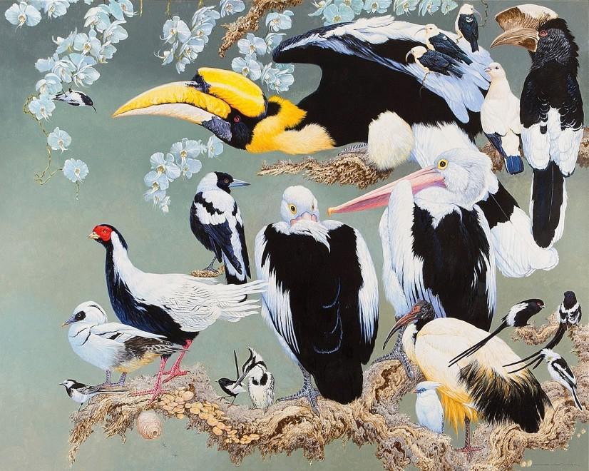 David Ord Kerr, Black and white birds