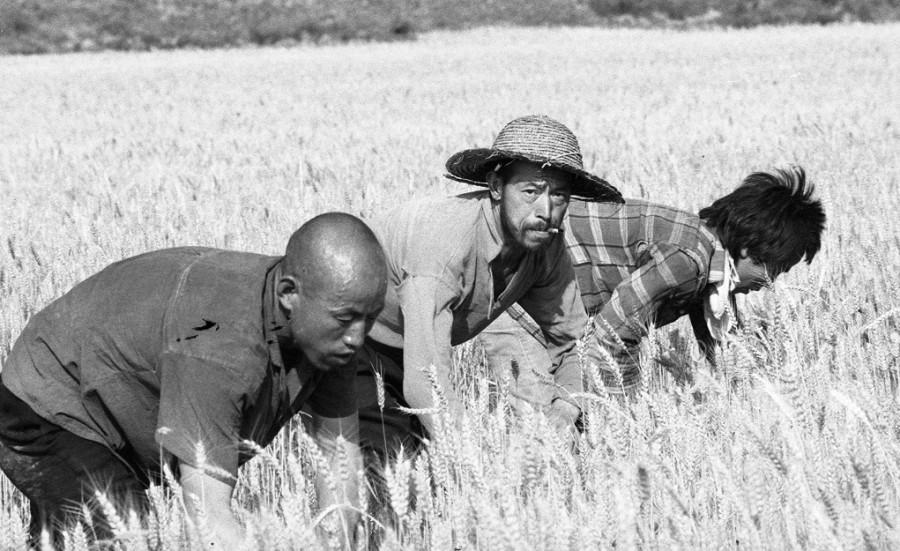 侯登科 Hou Dengke,麦客 The Wheat-hands,1982-2000,数字微喷 Inkjet Print,60.7×50.3cm