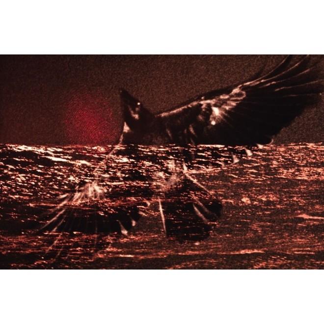 鸦·梦游飞行, 1980,Ravens, Noctambulant Flight,深濑昌久 Masahisa Fukase