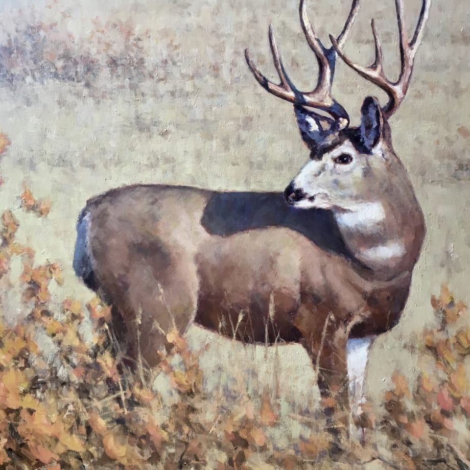 Greg Scheibel, Muley