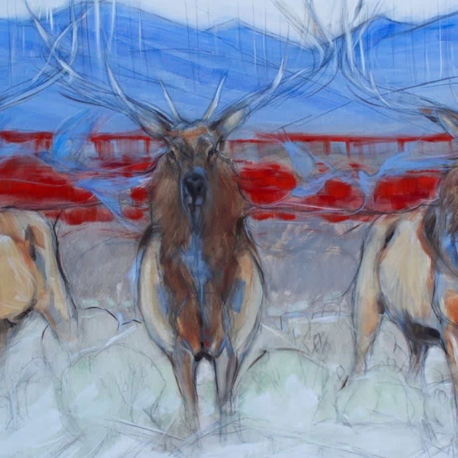 Amy Lay, BLUEBIRDS AND BULLS