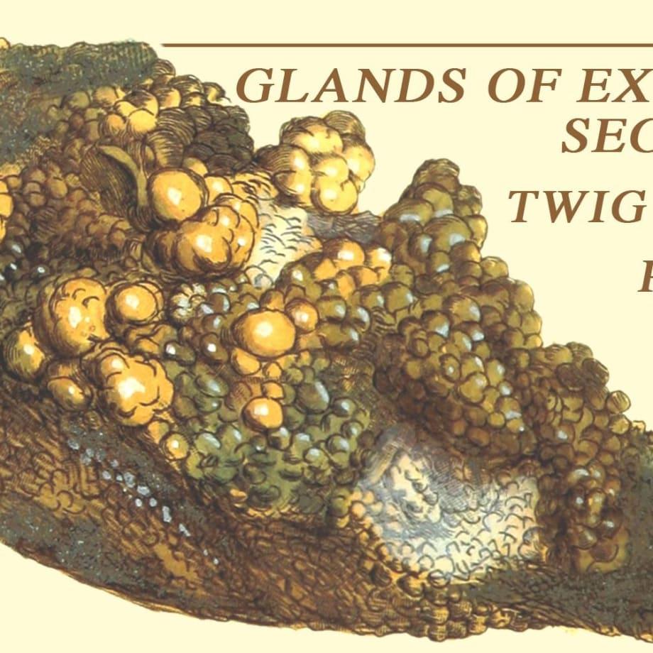 Glands Of External Secretion // Twig Harper // Posset