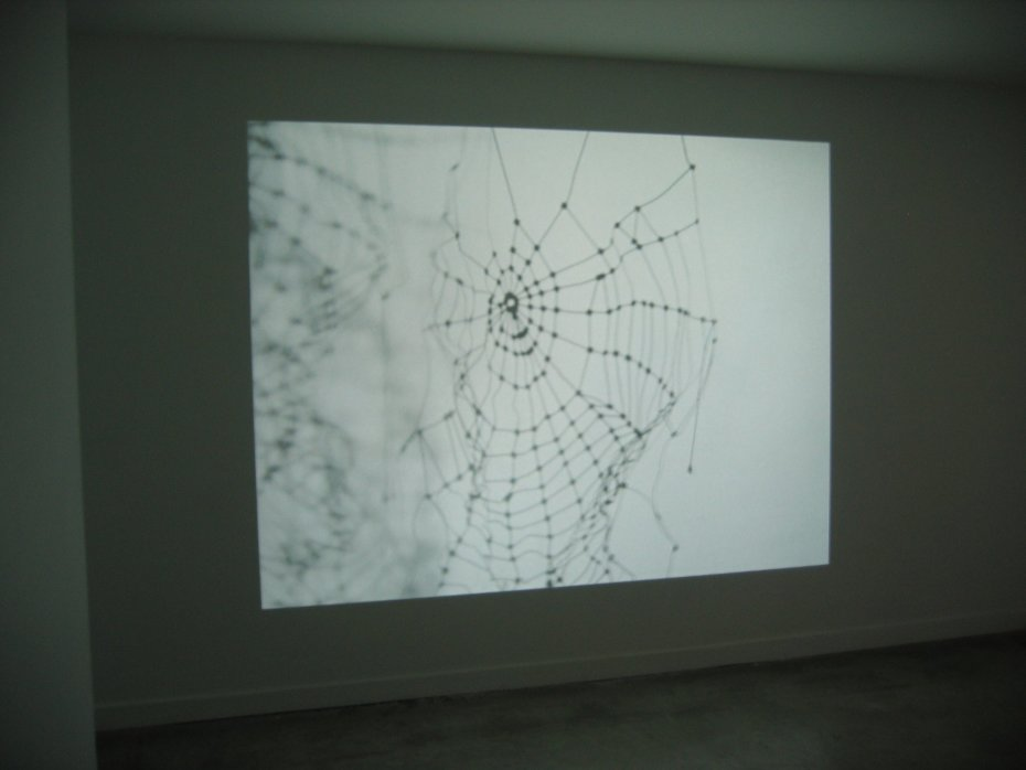 Carlos Amorales, Discarded Spider, 2008, One channel video projection