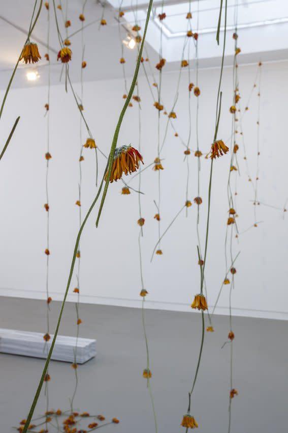 Anya Gallaccio, Head over heals (Barcelona), 1995