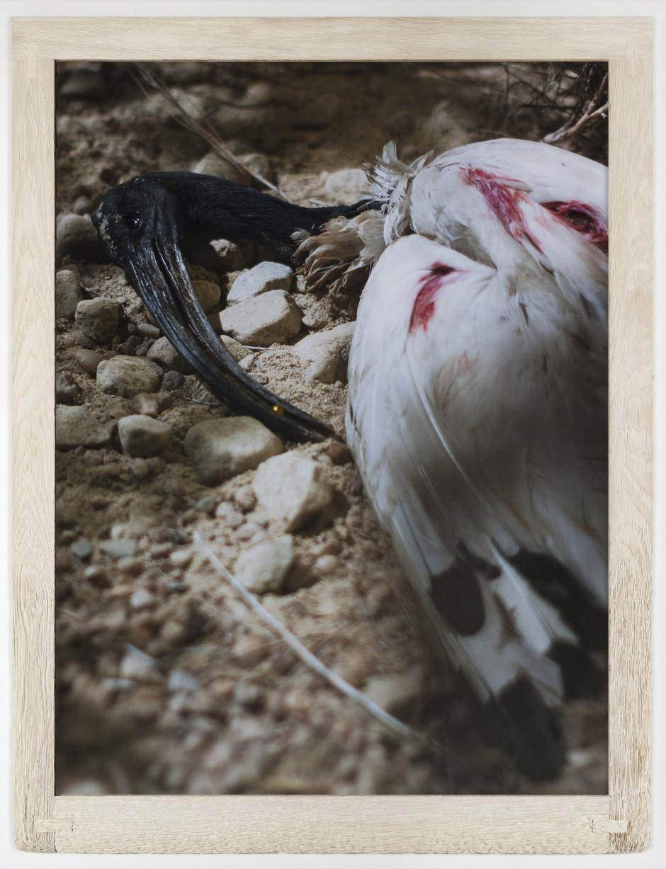 River of No Return, 2014  digital C-print in wood frame  124.5 x 94.9 cm 49 x 37 3/8 in.