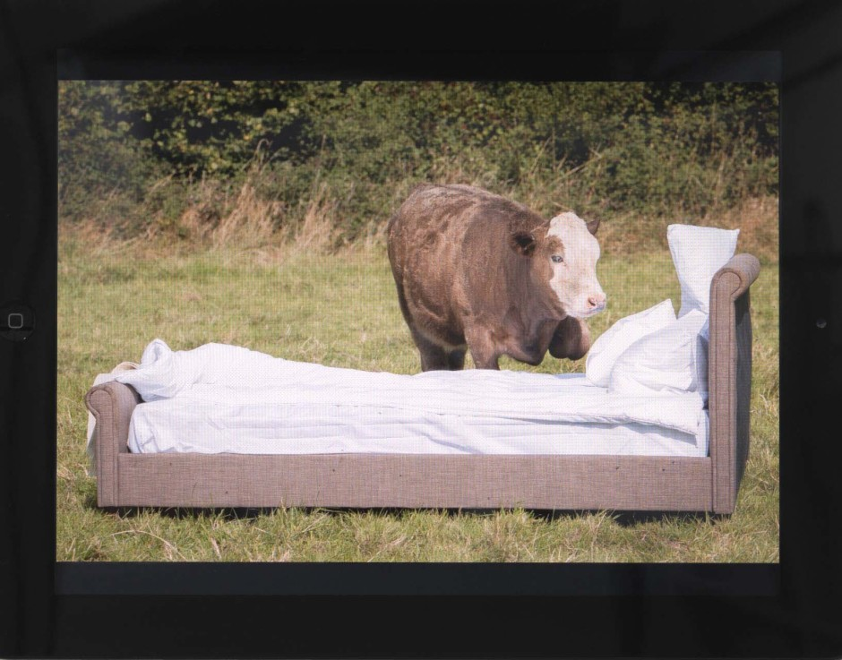 Cow and\with bed