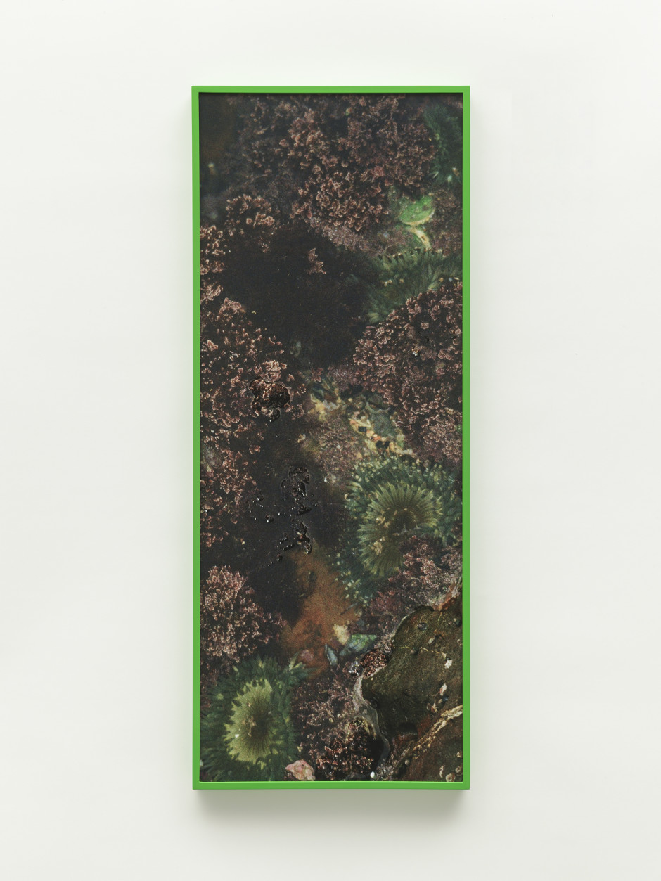 Sea Flowers, 2021  archival pigment print  91.4 x 35.6 cm / 36 x 14 in  edition 1 of 1 + 1 a/p (#1/1)