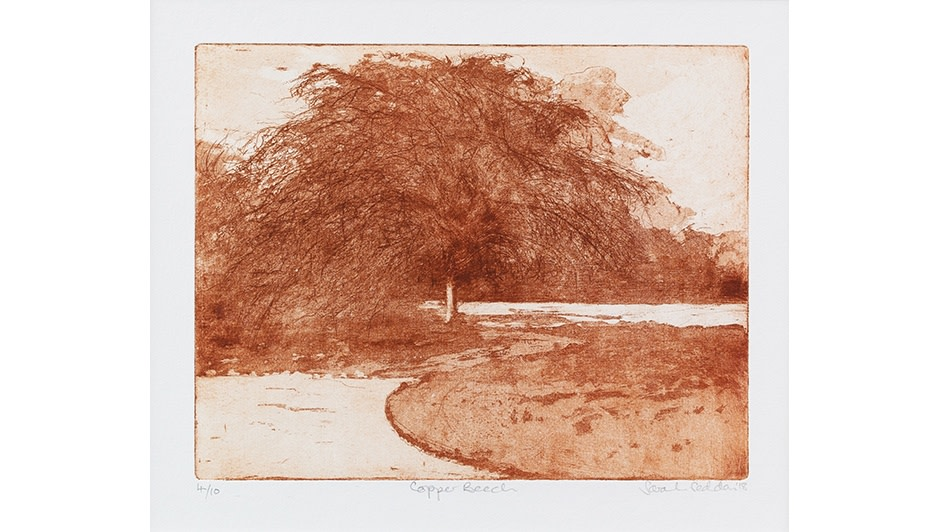 'Copper Beech' By Sarah Seddon