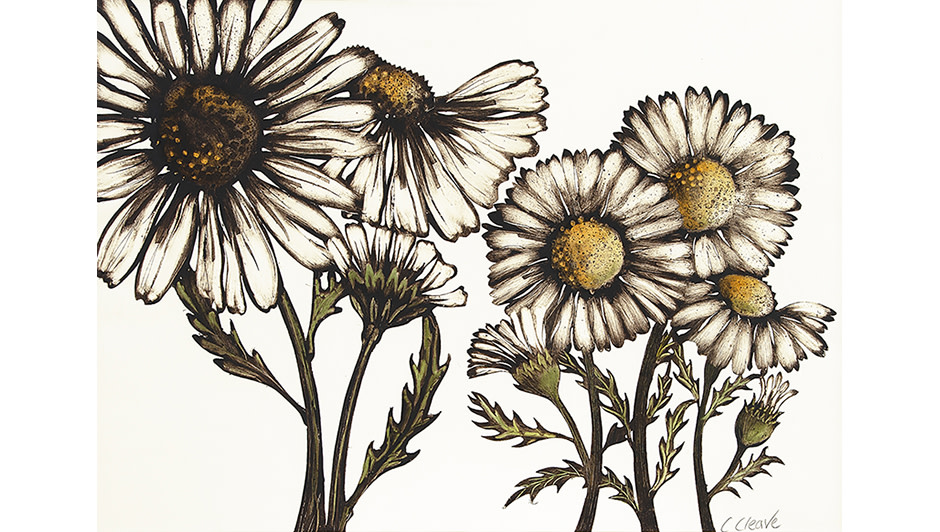 'Large Daisies' Caroline Cleave | Dry Point Monotype with Acrylic