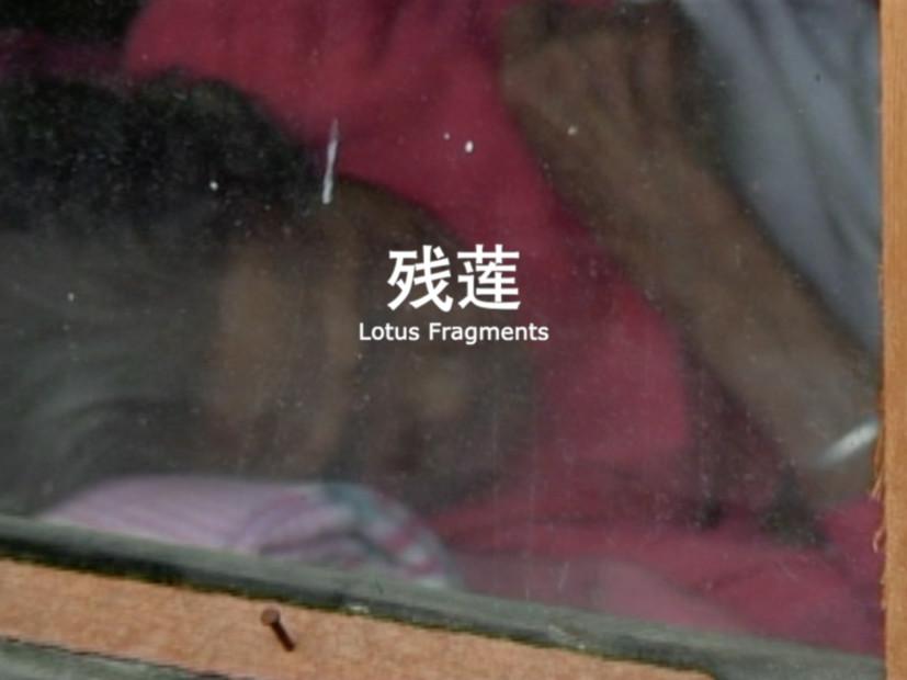 Tao Aimin 陶艾民, Lotus Fragments 残莲, 2002-2011