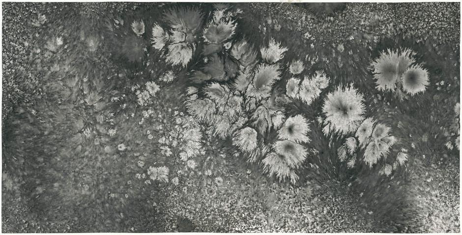Bingyi 冰逸, Life: Sunflower in Snow 生命波相:下雪的那天, 2018