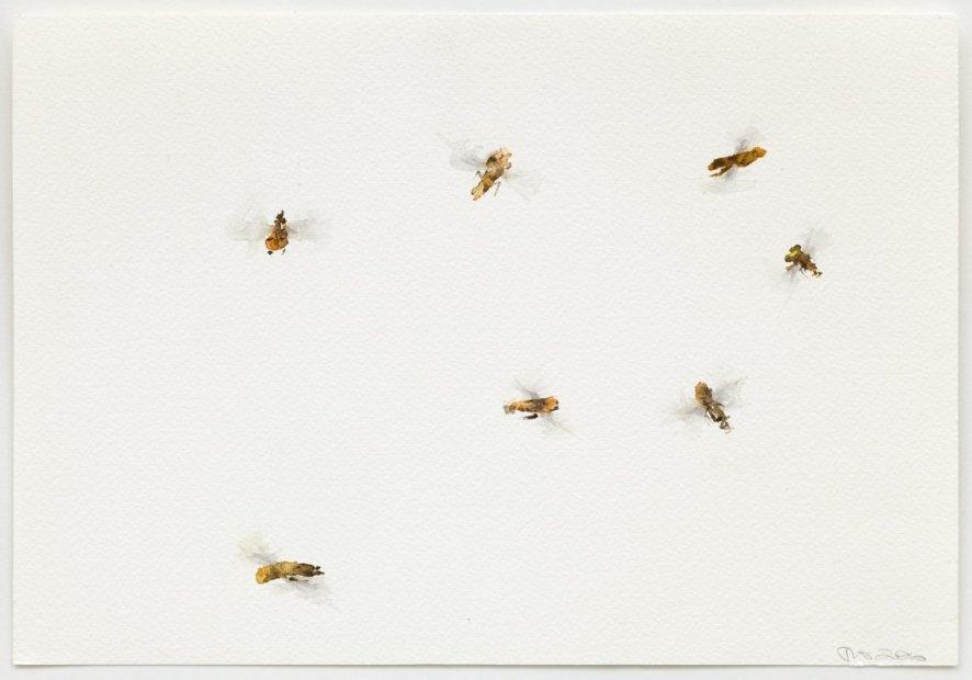 <em>Hoverflies</em>, 2011