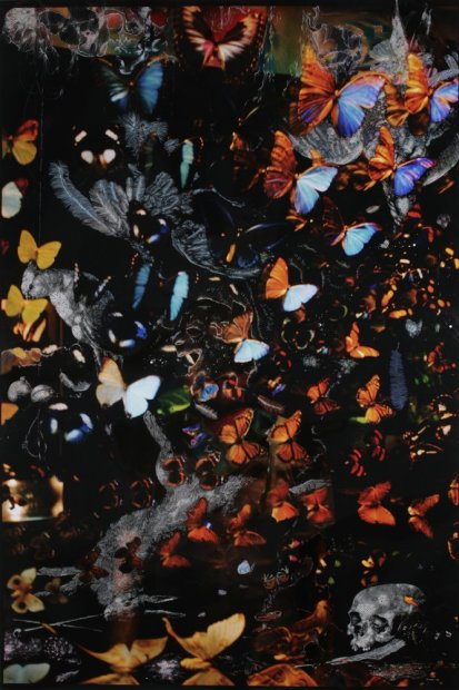 <em>Butterflies and furs</em>, 2008