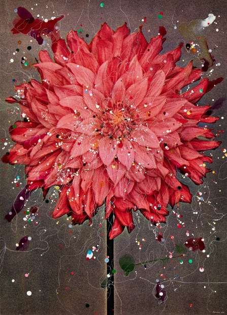 <em>Semi-Cactus Dahlia Almelo's Glory</em>, 2016