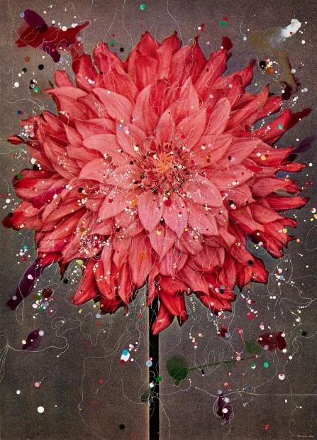 Semi-Cactus Dahlia Almelo's Glory, 2016
