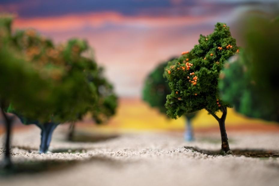 Sandra Elkind the grove. I picked a path I had never taken 2011