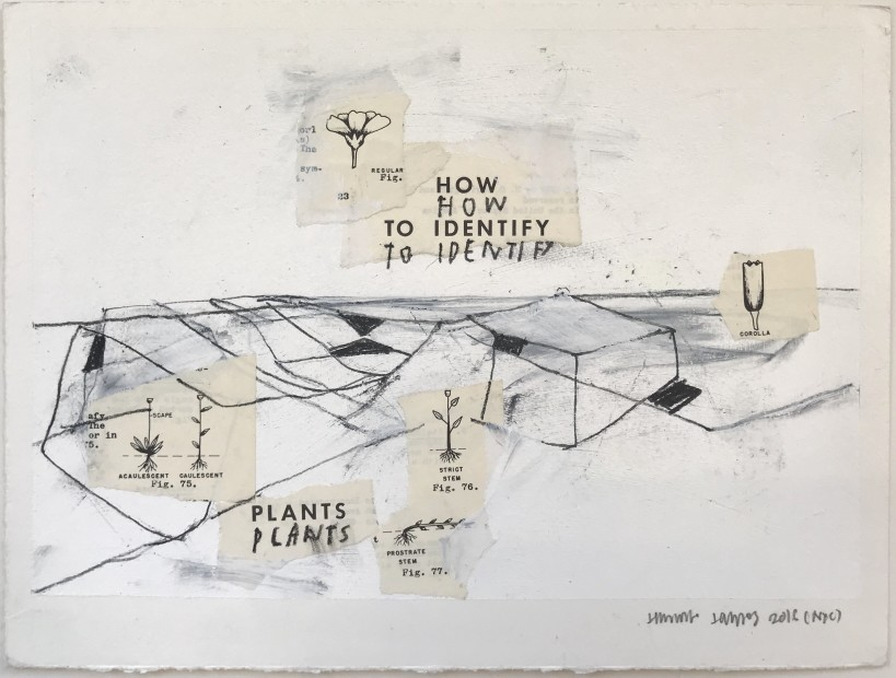 Jimmie James, how to identify plants, 2016