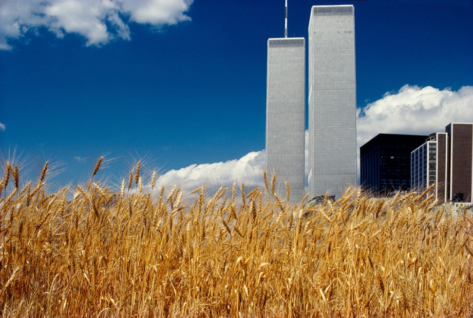 Agnes Denes,Wheatfield – A Confrontation: Battery Park Landfill, Downtown Manhattan – Blue Sky, World Trade Center, 1982, Courtesy Leslie Tonkonow Artworks + Projects, New York