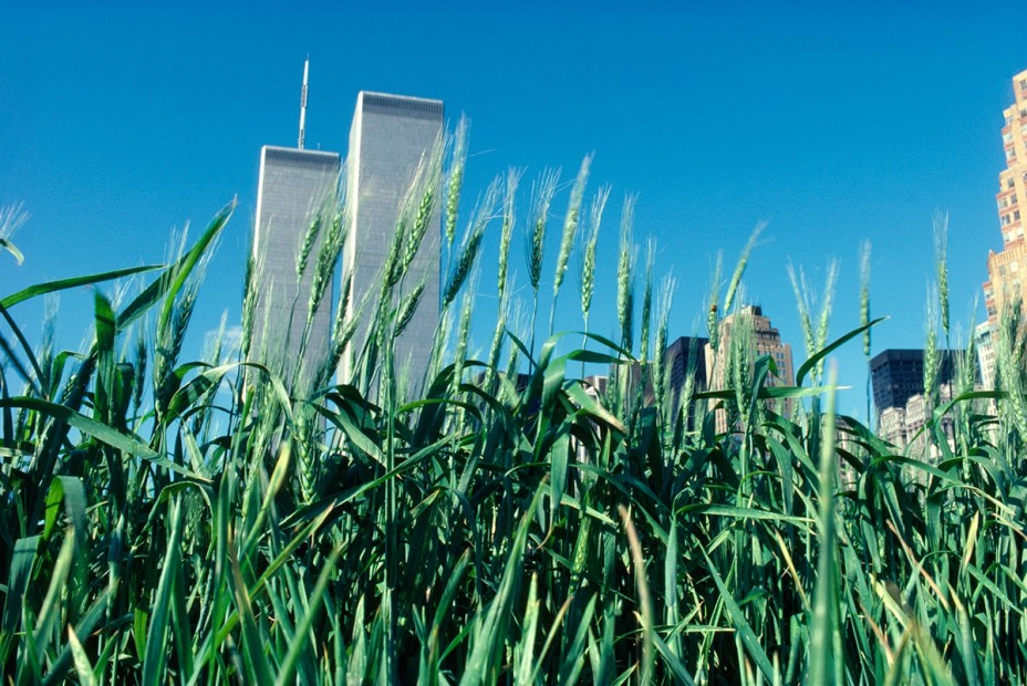 Agnes Denes, Wheatfield – A Confrontation: Battery Park Landfill, Downtown Manhattan, Green Wheat, 1982, Courtesy Leslie Tonkonow Artworks + Projects, New York