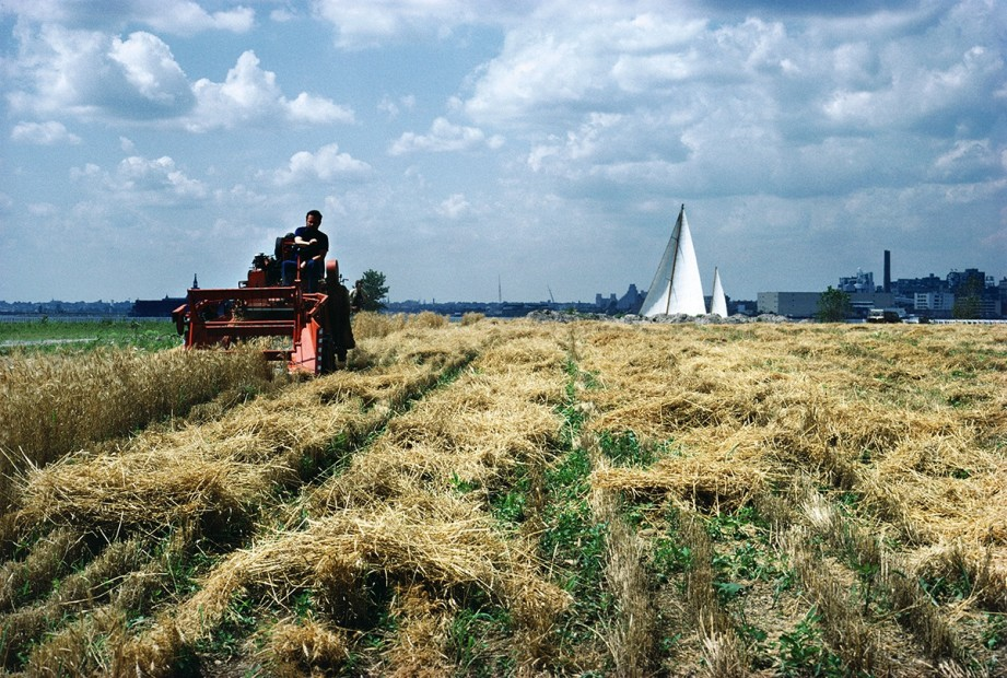 <p>Agnes Denes,&#160;<i>Wheatfield &#8211; A Confrontation: Battery Park Landfill, Downtown Manhattan &#8211; Harvest with Sailboat</i><span>, 1982, &#160;Courtesy Leslie Tonkonow Artworks + Projects, New York</span></p>