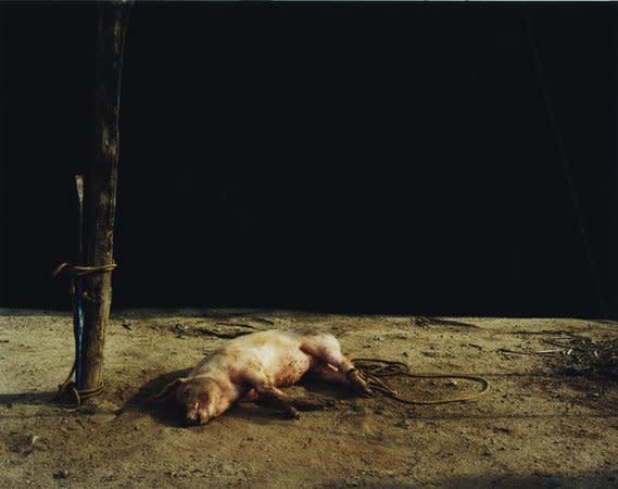 Death at sunset (pig), 2007, C-type print, 126 x 158 cm