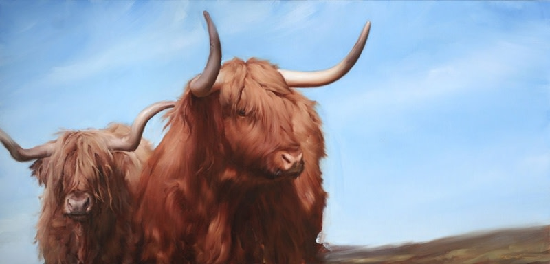 Highland Cattle, a commission by Michael J Austin
