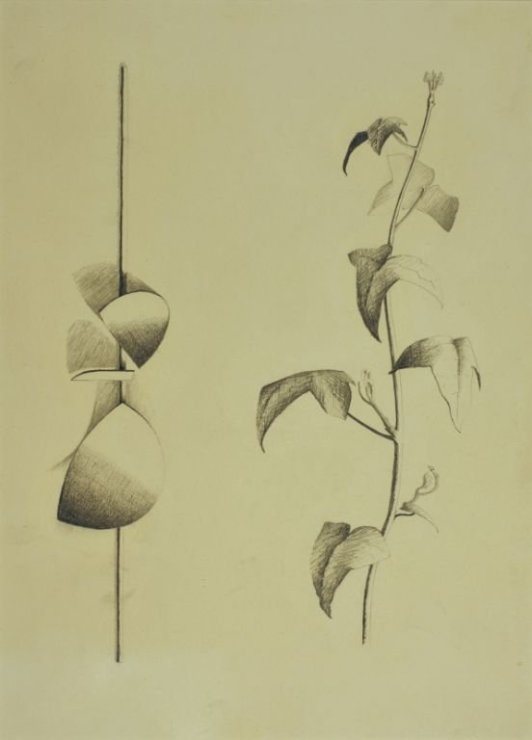 "<span class=""artist""><strong>Robert Adams</strong></span>, <span class=""title""><em>Drawing of curved forms with a tendril of ivy, opus 113</em>, 1960</span>"