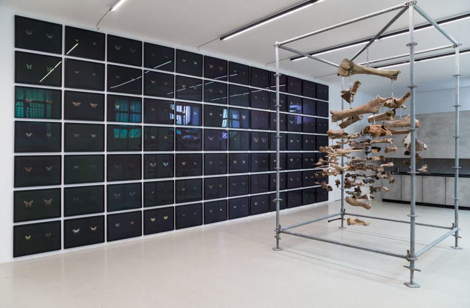 Maximilian Prüfer, Installation View III, TIER, 2019