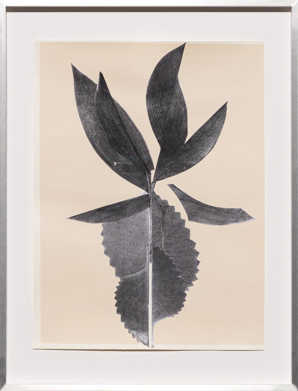Frauke Dannert Frucht, 2018 Paper Collage 29 x 21 cm 11 3/8 x 8 1/4 in