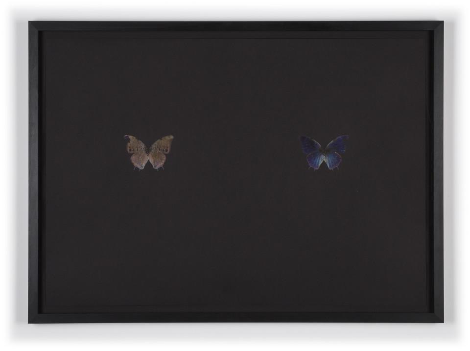 Maximilian Prüfer, Schmetterlingsdruck Nr. 1, 2017