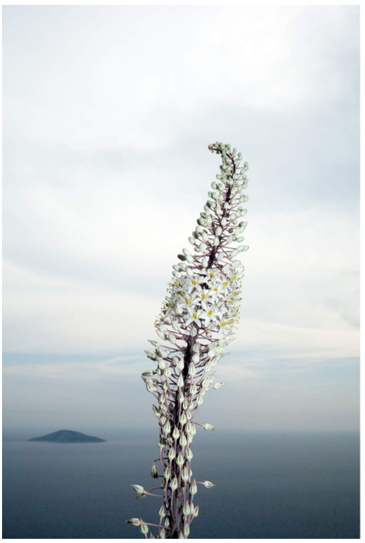 Michael Ullrich Hydra, 2016 Fine art print 100 x 70 cm