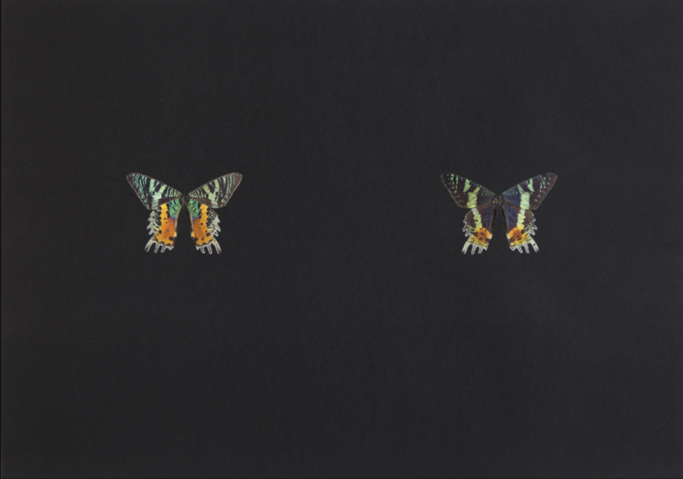 Maximilian Prüfer Black Butterfly-Print #9, 2017 Butterfly scales on black paper 45 x 63 cm 17 3/4 x 24 3/4 in
