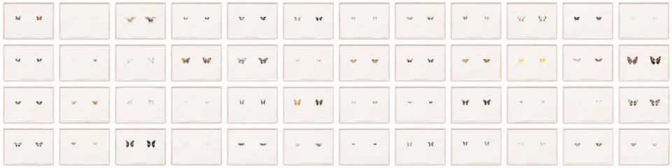 Maximilian Prüfer  Butterfly Prints (48 pieces), 2016  Naturantypie, butterfly pigments on paper  each 63 x 45.3 cm each 24 3/4 x 17 7/8 in