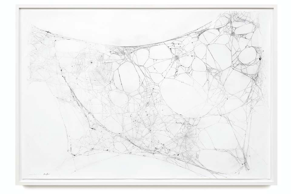 Maximilian Prüfer  Mothercity 2b, 2016  Naturantypie Spider web on paper, Paper incl. Frame (Museum Glass)  104 x 151 cm 41 x 59 1/2 in