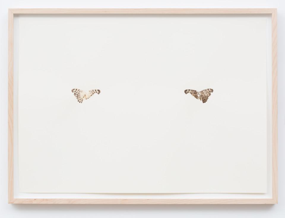 Maximilian Prüfer, Schmetterlingsdruck Nr. 5, 2014