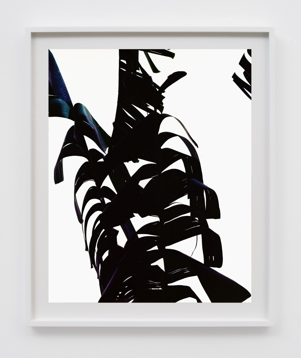 Image: Matthew Porter  Black Frond, 2018  signed, titled, dated and numbered verso  archival pigment print  image size: 20 x 16 inches (50.8 x 40.6 cm) frame size: 23 1/2 x 19 1/2 x 1 3/8 inches (60 x 49.5 x 3.5 cm)
