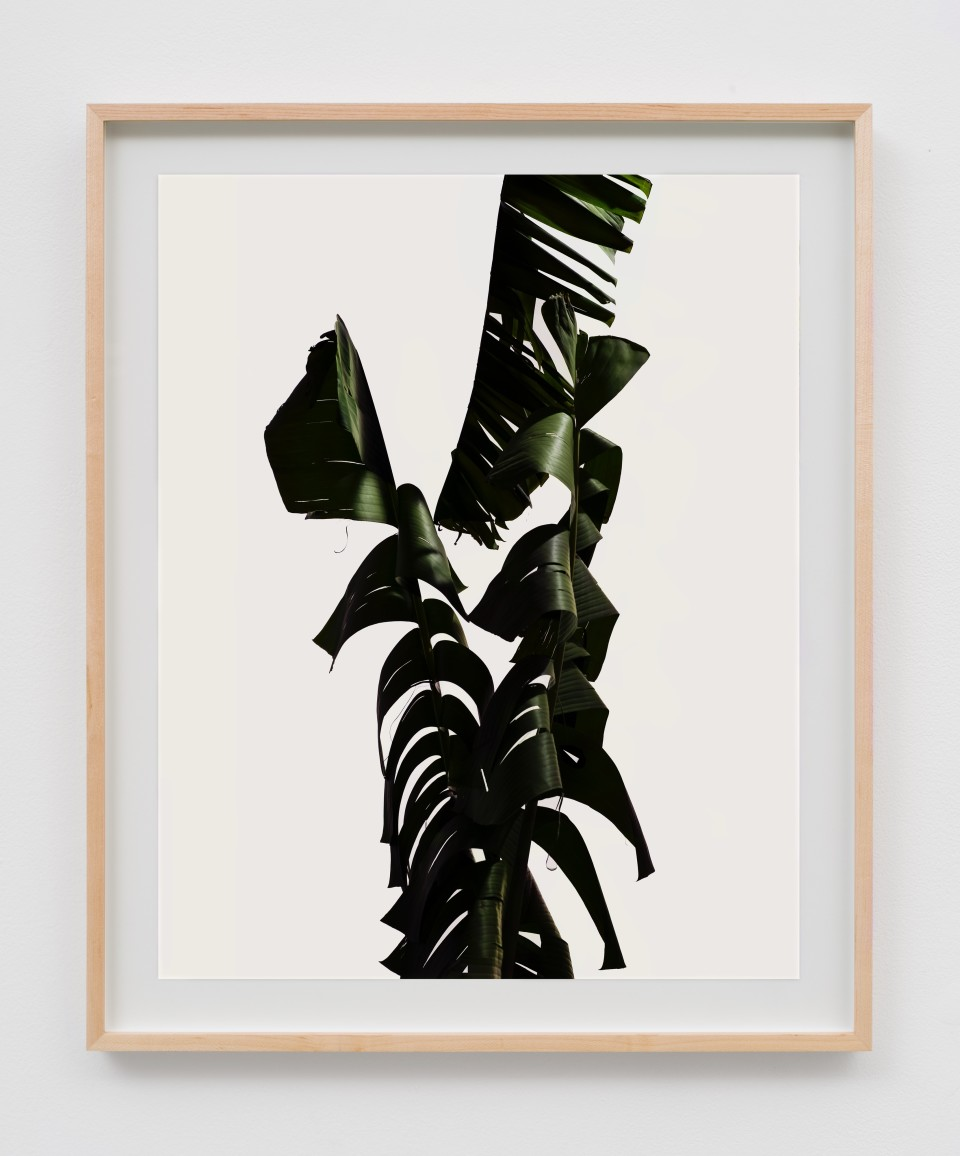 Image: Matthew Porter  Tall Frond, 2018  signed, dated, titled and numbered verso  archival pigment print in artist's frame  image size: 20 x 16 inches (50.8 x 40.6 cm) frame size: 23 1/2 x 19 1/2 x 1 3/8 inches (60 x 49.5. x 3.5 cm)
