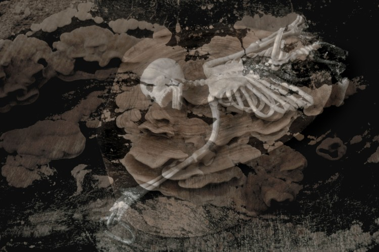 <div class=&#34;artist&#34;><strong>Jo SPENCE</strong></div> 1934 - 1992 <div class=&#34;title&#34;><em>The Final Project [Small skeleton 3]</em>, 1991 - 1992</div> <div class=&#34;signed_and_dated&#34;>Collaboration with Terry Dennett</div> <div class=&#34;medium&#34;>Digital print from medium format negative</div> <div class=&#34;dimensions&#34;>39 x 60 cm</div> <div class=&#34;edition_details&#34;>Edition of 2 plus 1 Estate Copy</div>