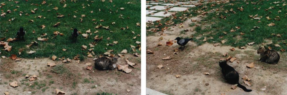 Shimabuku, Cats and Crows, 2010