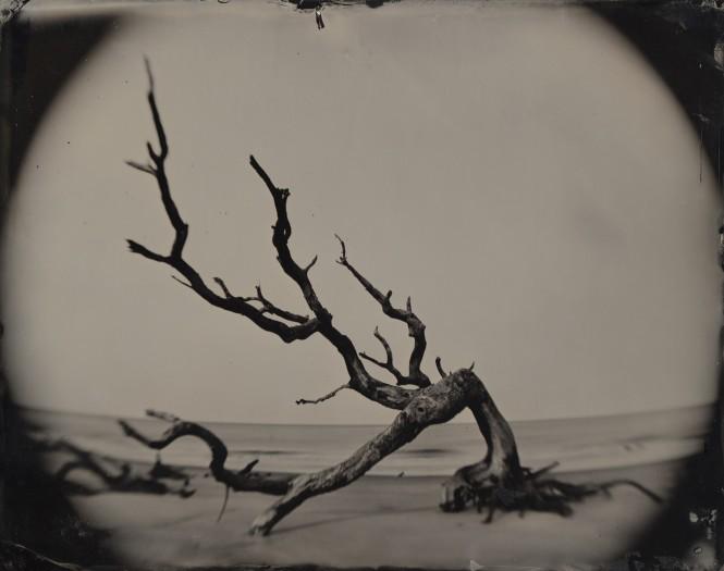 Joni Sternbach, 05.02.21 #8 Bent Tree / Jekyll Island