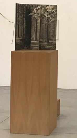 Peter Morrens, Boshoek, 2018