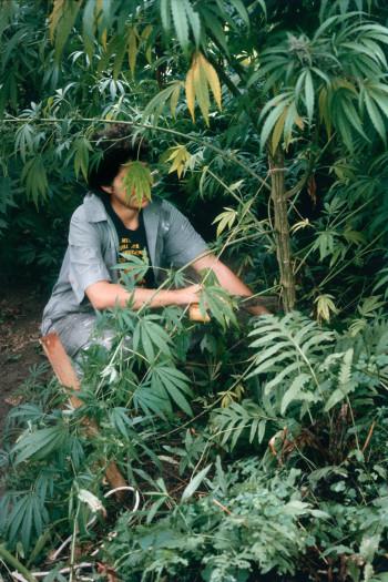 Mel Frank, Harvesting, Dutchess County, NY, 1982