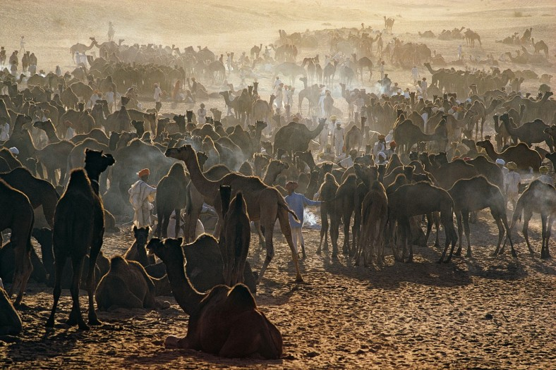 Camel Fair, Pushkar, Rajasthan