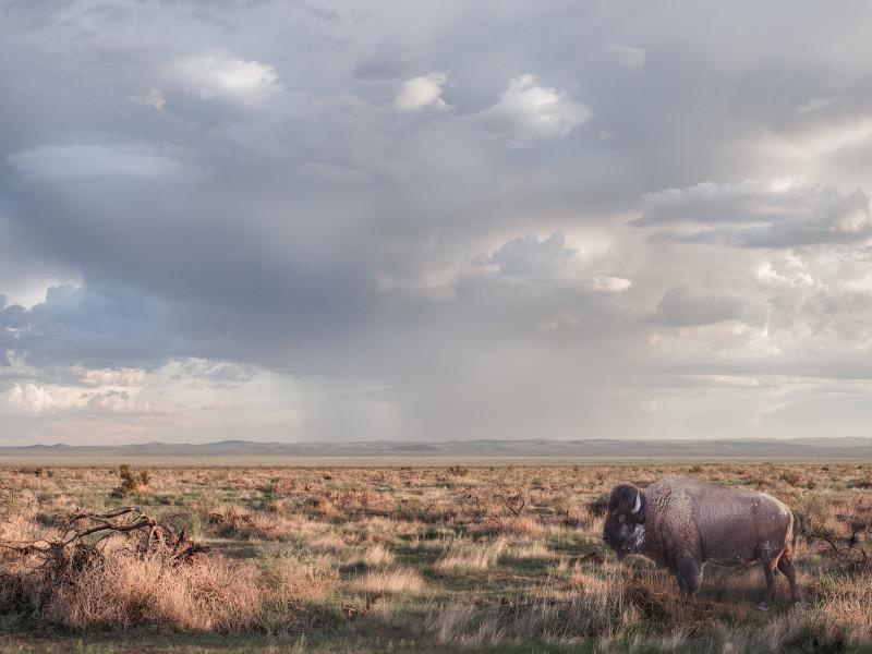 Kristin Kirkley, Chilcote Ranch Rd, 2017