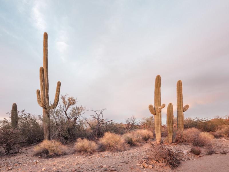 Kristin Kirkley, Sweetwater Road (Arizona), 2018