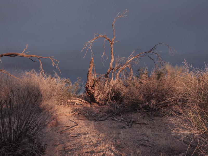 Kristin Kirkley, Desert Brush, 2018