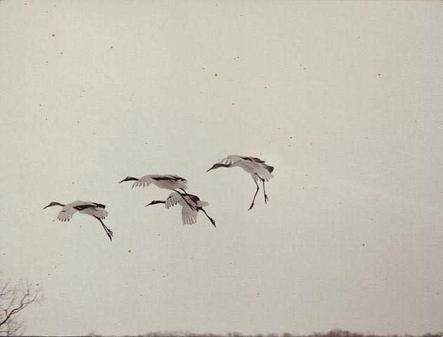 1176, from Nakazora, 2004
