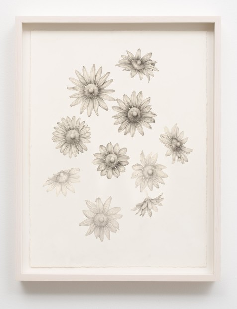 Aurel Schmidt Untitled (Nipple Flowers) pencil, colored pencil on paper paper size: 24 x 18-1/4 inches framed size: 26 x...