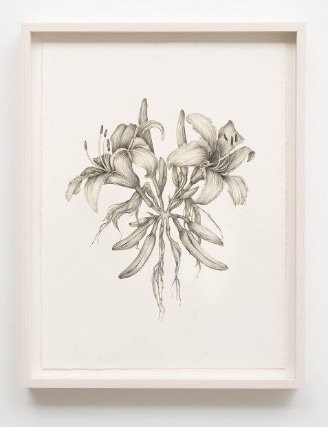 Aurel Schmidt Untitled (Goth Lilies) pencil, colored pencil on paper paper size: 20-1/2 x 17 inches framed size: 22-1/2 x...