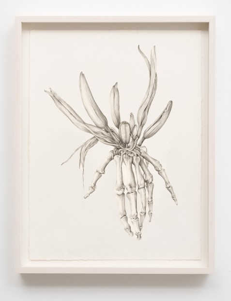 Aurel Schmidt Untitled (Skeleton Lily) pencil, colored pencil on paper paper size: 17 x 14 inches framed size: 19 x...